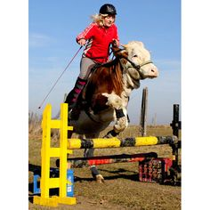 15-year-old Regina jumps over an obstacle with her cow Luna in the Bavarian town of Traunstein in southern Germany. Regina decided to pursue her hobby of show jumping, despite not having a horse at her disposal  Picture: AFP/GETTY