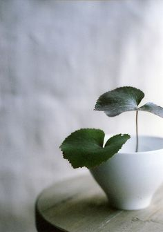 shinobu kitamura - love the simplicity.