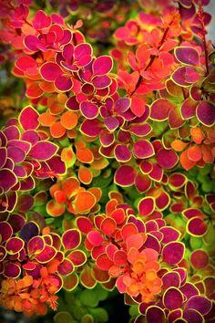 Landscape Edging Stone, Garden Shrubs, Shade Garden Plants, Flowering Shrubs, Front Yard Landscaping, Landscaping Ideas, Landscaping Contractors, Florida Landscaping, Small Gardens