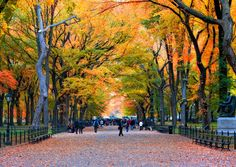 5 Cruises For Enjoying The Fall Foliage from NYC: Central Park