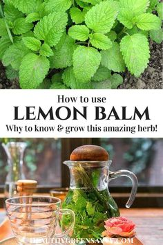 Uses for lemon balm: Lemon balm is far and away my favorite herb for better sleep! This amazing plant deserves a place in your garden and h.