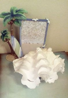 1Pair Fluted Giant Scaly Clam Seashell by ShatomaBeachHerbs
