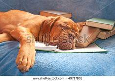 Livres Animaux Photos et images de stock | Shutterstock