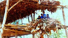 Free (or Cheap) Volunteer Work in Indonesia