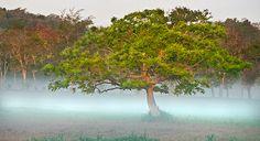 Misty Morning, Dorado