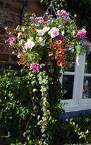 Hanging Basket Entry Number Nine #hangingbasket #garden #gardening #flowers #inspiration #summer