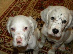 I really miss when Dusty & Luke were puppies!