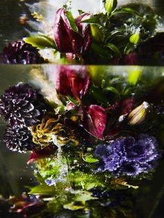 Iced Flowers by Azuma Makoto | Copyright: AMKK | www.holex.com