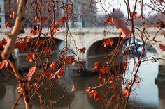 Rome Ponte Cavour
