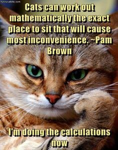 Cats can work out mathematically the exact place to sit that will cause most inconvenience. ~Pam Brown  I'm doing the calculations now