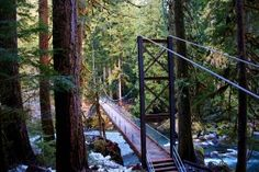 The Staircase Loop is a perfect family-friendly hike on the Olympic Peninsula. Photo by Douglas Scott.