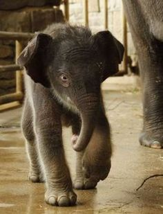Another cute baby elephant, looks like one of East's friends.
