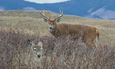 Whitetail Hunting Tips, Deer Hunting Records and Whitetail Deer Hunting, Deer Hunting Tips, Bow Hunter, Hunting Rifles, Archery Hunting, Hunting Season, Wildlife Conservation, Animals, Compound Bows
