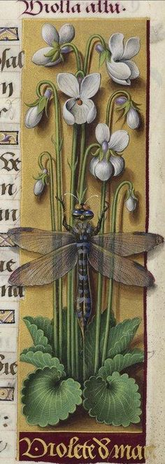 Manuscript illuminator Jean Bourdichon (1457-59-1521), 1503-08, Grandes Heures d'Anne de Bretagne, France. #Dragonfly #Libellule