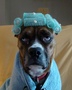 Photo of the day for our local news... Apparently this dog loves to dress up. Some days I feel like this dog looks