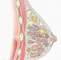 Breast Cysts: Causes and Treatment