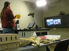 Looking for an interactive zoo experience without traveling to south west Kansas?  Try our Distance Learning program where we bring the zoo to you.
