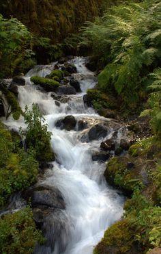 Wahkeena Trail, Columbia Gorge, Oregon.