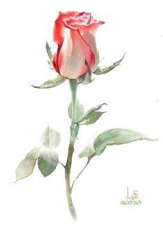 What is Your Painting Style? How do you find your own painting style? What is your painting style? Botanical Art, Botanical Illustration, Painting & Drawing, Watercolor Paintings, Watercolors, Rose Paintings, Art Aquarelle, Drawn Art, Realistic Paintings