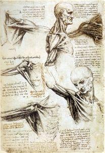 Anatomy Study of Shoulders - Leonardo da Vinci - The Athenaeum