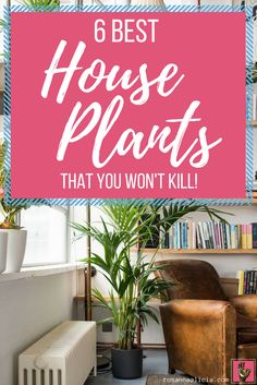 6 Best Easy-Care House Plants That You Won't Kill. Looking to add some jungalicious boho vibes to your space? Worried you're inherently a plant-killer? Read on for 6 easy-to-care-for houseplants that are hardy enough to withstand neglect. Get the jungalow look with plants ft. Swiss Cheese Plant (monstera), Kentia palm, snake plant (Sansevieria) and more.