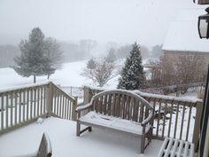Back yard winter