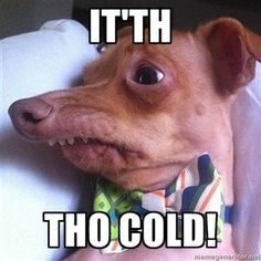 "It'th Tho cold! | Tuna, the ""Phteven"" dog"