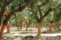 paisagem agraria do alentejo - Google zoeken