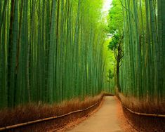 Sendero de bambú, Kyoto, Japón