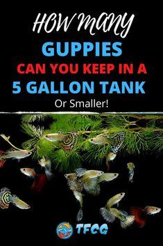 Aquarium Setup, Aquarium Ideas, Aquarium Fish, Tropical Freshwater Fish, Tropical Fish, 10 Gallon Fish Tank, Fish Care, New Tank, Guppy