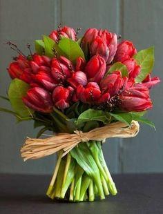 "Képtalálat a következőre: ""gerbera"" Red Tulips, Tulips Flowers, All Flowers, My Flower, Fresh Flowers, Planting Flowers, Beautiful Flowers, Wedding Flowers, Parrot Tulips"