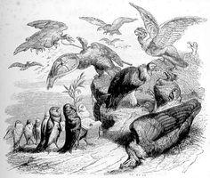 fable Jean de La Fontaine : les vautours et les pigeons