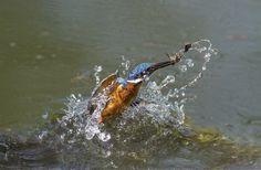 underwater fishing by Marco Redaelli, via 500px