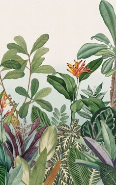 Our Oasis wallpaper mural is made for anyone who wants to escape to a plant life paradise at home. This amazing feature wall design is made up of a variety of hand-drawn exotic plants and vintage botanical illustrations. All of the lush green plants are brought together to create a dense jungle landscape scene, which will immerse your room in beautiful nature and tropical aesthetics. The mural design is accented with vibrant tropical tones. Tropical Wallpaper, Beach Wallpaper, Flower Wallpaper, Exotic Plants, Green Plants, Tropical Plants, World Map Wallpaper, Forest Wallpaper, Feature Wall Design