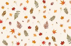 Pressed Autumn Leaf Pattern Wallpaper Mural