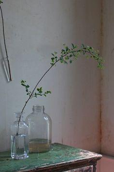 bridal wreath branch
