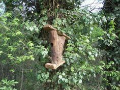 Feeding Birds in the Garden Czabai - (nature reserve) - Erd, Hungary