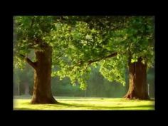 Magie stromů. Které a proč je objímat. Tarot, Nordic Interior, Mindfulness Meditation, Reiki, Healing, Mantra, Nature, Youtube, Medicine