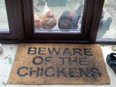 Beware of the Chickens  This used to be me!!!  Stella would come in the house.