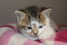 Galway Cat Rescue Photo by Grainne Stark