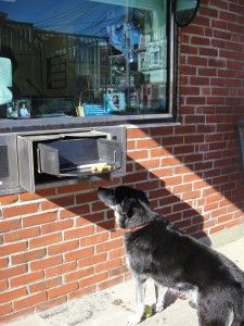 Making a Withdrawal from the Drive Through Window at the Bank in Provincetown, Cape Cod.