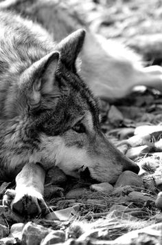 YOU WERE LOYAL AND DIDN'T DESERVE TO BE SHAMED. YOU DID LOOK LIKE A WOLF THOUGH.