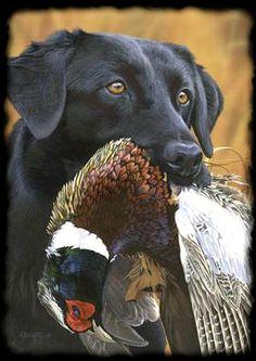 DUCK HUNTING DOG TRAINER - RETRIEVER TRAINING - DOG BREEDERS TEXAS ...