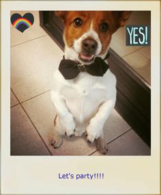 BeFunky- I chose this photo editor app for my lesson plan: My best pet ever!  (mobile learning storytelling activity). I consider it is really useful and intuitive. Here you have a model: my dog Bruno is really excited because he's partying with his beloved Mia :)