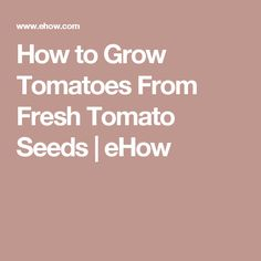 How to Grow Tomatoes From Fresh Tomato Seeds | eHow