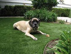 Artificial turf is an excellent solution for backyards and dog day cares.