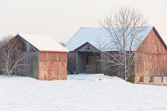 Winter Snow On Barns | Fair Hill, Maryland | Flickr - Photo Sharing!