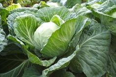 Vegetable Gardens in Phoenix; ehow article month-by-month