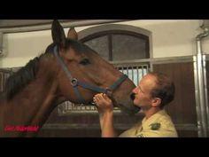 Gut Aiderbichl: Bewegender Abschied Von Polizeipferd Zenit Horses, History, Animals, Youtube, Going Away, Police, Equestrian, Bayern, France
