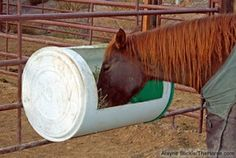 Make this hay feeder and keep the hay up in reach and clean. Thehorse shares easy instructions to make your own low cost hay feeder. Keep your horse from eating wet or muddy hay by making these with used barrels. Horse Shelter, Horse Stables, Horse Farms, Horse Tips, My Horse, Horse Love, Horse Gear, Hay Feeder For Horses, Horse Feeder
